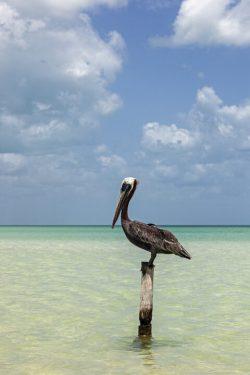 1982243136-Copia de Isla Holbox Las Nubes pelicano DPG_IMG_8458web 2