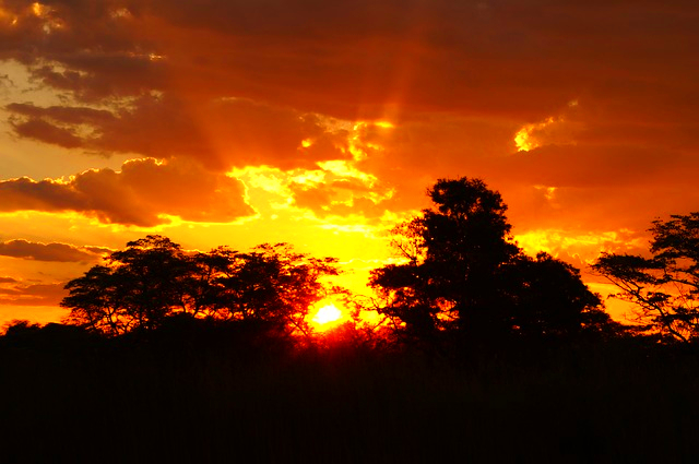 Sunset Jungle Botswana