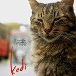 Movie Review: Kedi
