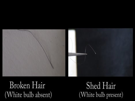hair breakage or shedding know the difference delux magazine