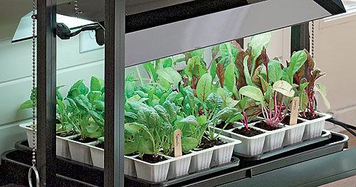 Gardening Under Grow Lights Gardener S Supply