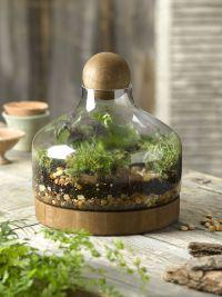 Glass & Wood Terrarium, Large | Gardener's Supply