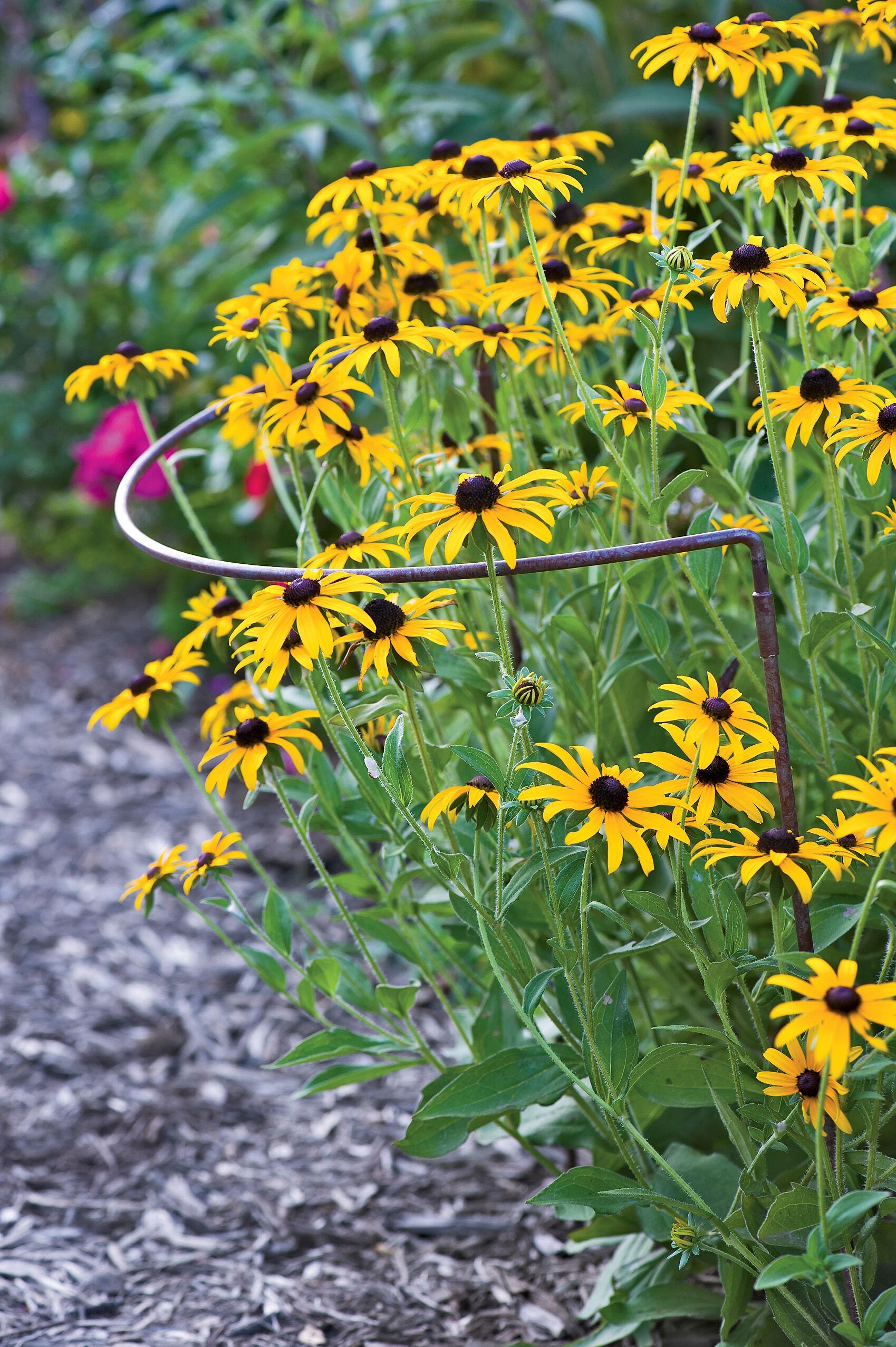 Grow Through Flower Supports  Gardeners Supply