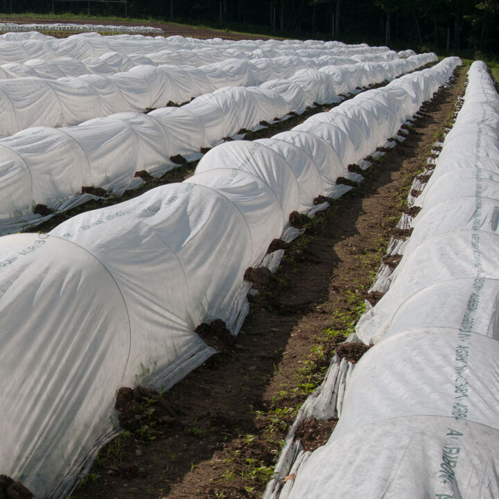 Johnnys Selected Seeds  Supporting Farms  Gardens Since