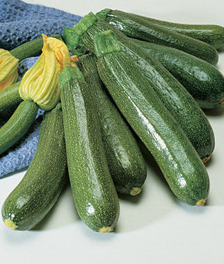 Fordhook Zucchini Summer Squash Seeds And Plants