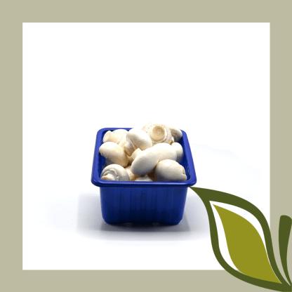 champignon wit bakje