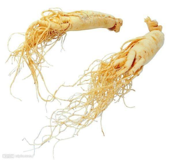 230-plantas-medicinales-mas-efectivas-y-sus-usos-ginseng-raiz