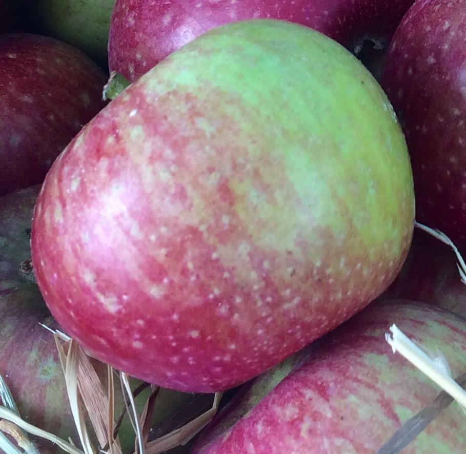 een appelboom in je moestuin