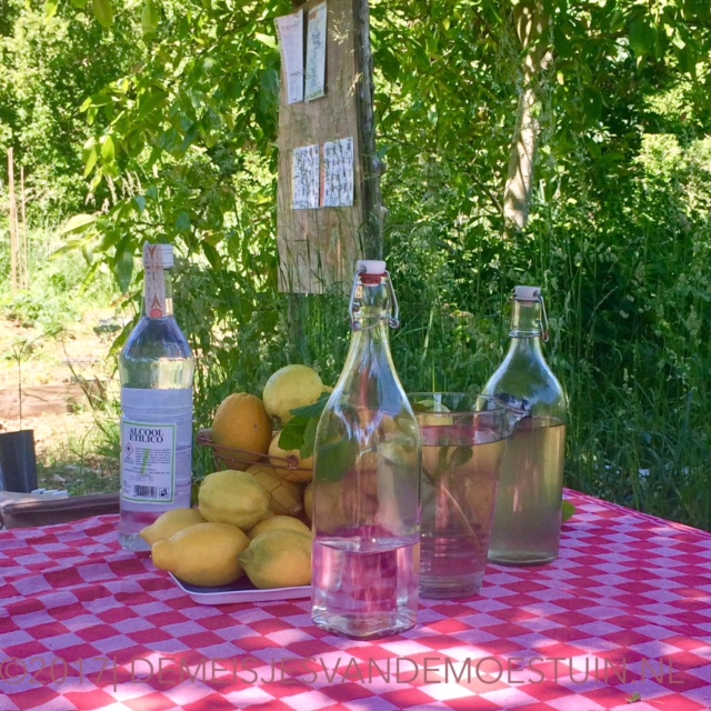 workshop limoncello maken op 18 juni