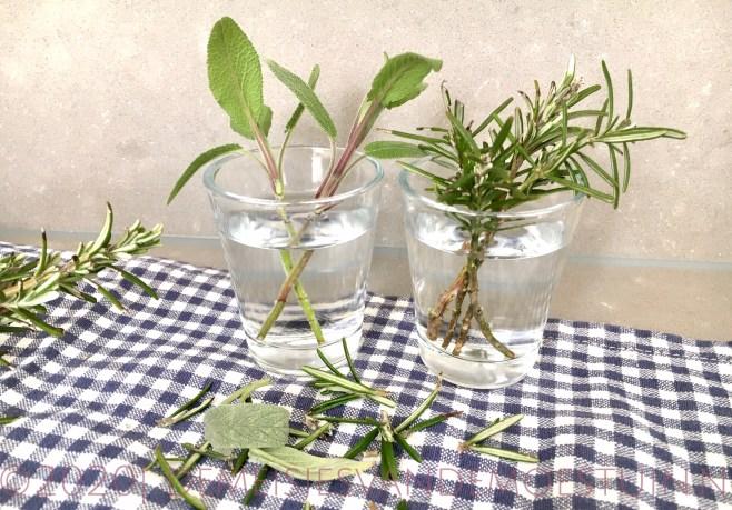 rozemarijn en salie stekken