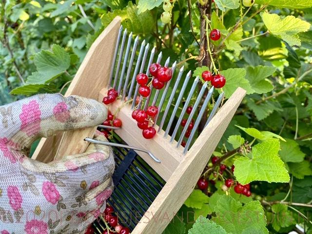 bessen oogsten