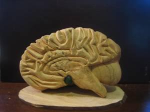 Brain - Wood carved