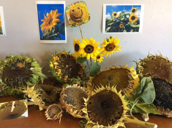Sunflower Challenge Day at Square Hole Club