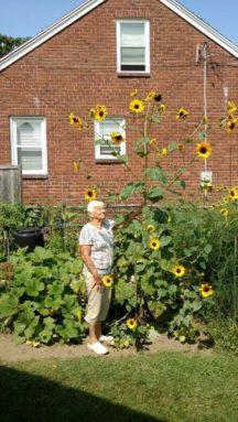 2017-sunflower-challenge-5