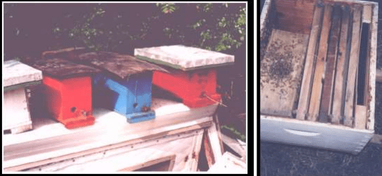 Núcleos de abejas Paquete abejas instalado