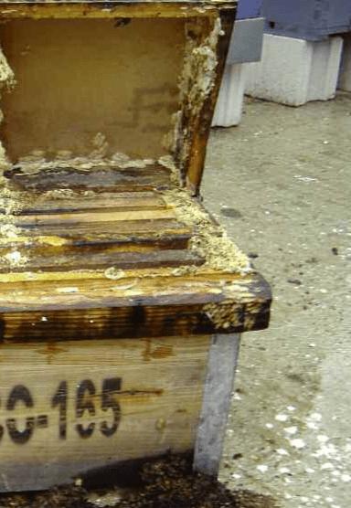 DeMielesyAbejas -cajas 2