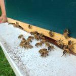 De Mieles y Abejas - Nutrición de la colmena