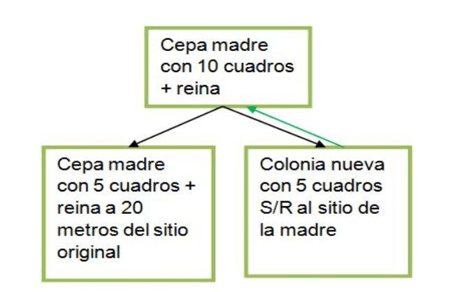 DIVISIONES EN LA COLMENA   DIVISIÓN DE DOS   De Mieles y Abejas