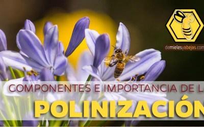 🐝🌷 COMPONENTES E IMPORTANCIA DE LA POLINIZACIÓN