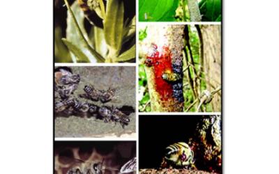Recolección de los propóleos trabajados por las abejas