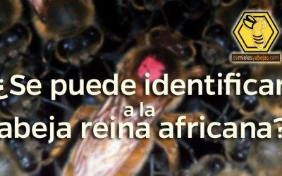 ¿Se puede identificar a la abeja reina africana?