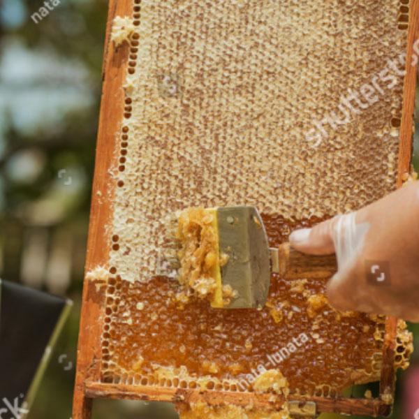 ¡Aprovecha! aquí TIPS para DESOPERCULAR los panales de abejas