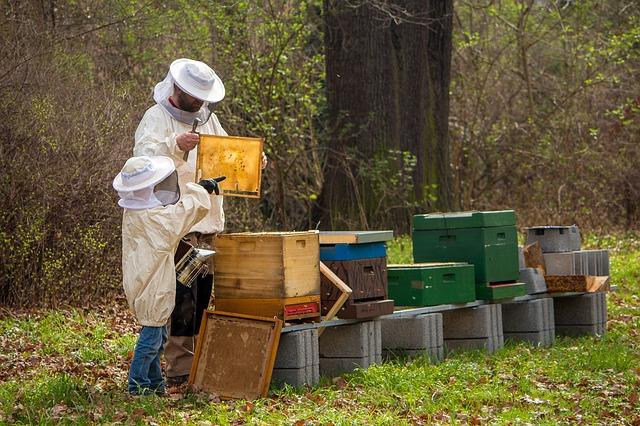 Ciclos de trabajo del apicultor en sus apiarios