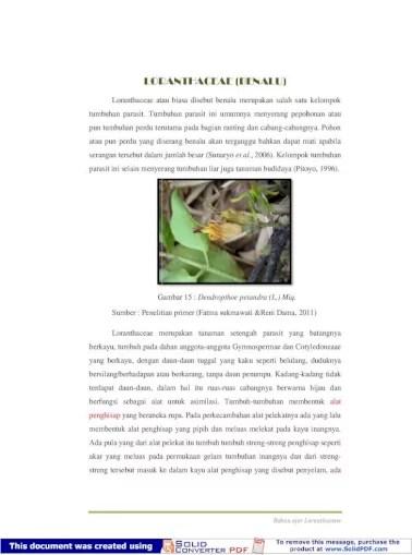 Klasifikasi Benalu : klasifikasi, benalu, LORANTHACEAE, (BENALU), 8/SKRIPSI_SUKMA/MODUL...Di, Dalam, Botani,, Klasifikasi, Tumbuhan, Benalu, Sebagai, Berikut:, Divisio, Spermatophyta, Subdivisio, Angiospremae, Kelas, Dicotyledonae, Document]
