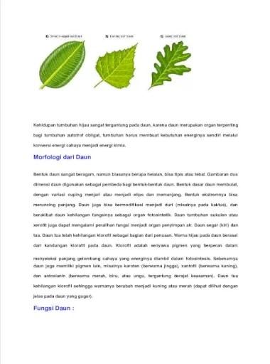 Fungsi Daun Tumbuhan : fungsi, tumbuhan, Fungsi, Adalah, Pembuat, Makanan, Utama, Bagian, Hampir, Semua, Tumbuhan