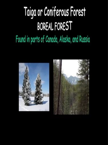 Powered by create your own unique website with customizable templates. Taiga Or Coniferous Forest Boreal Forest Animals Of The Taiga Adaptations Many Animals Have Thick Pdf Document