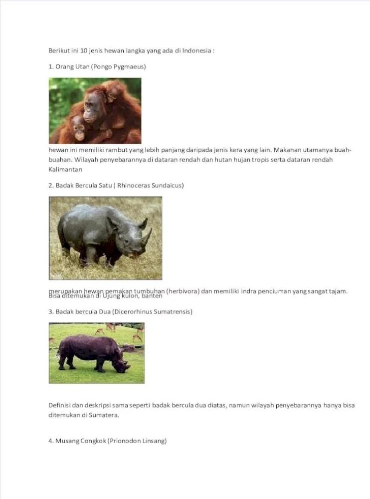 Deskripsi Badak Bercula Satu : deskripsi, badak, bercula, Berikut, Jenis, Hewan, Langka, Indonesia, Document]