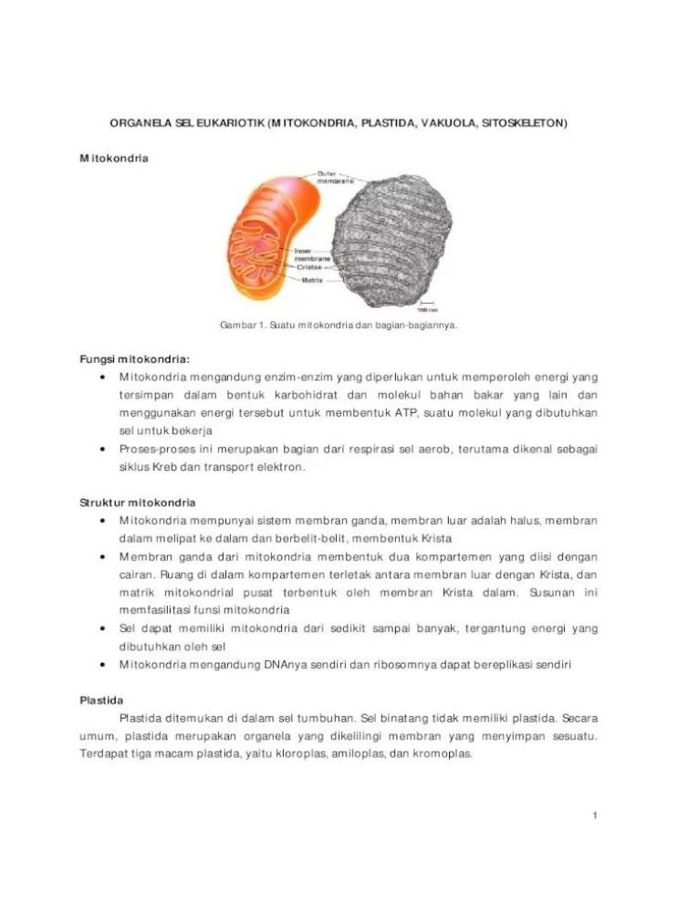 Gambar Mitokondria Dan Bagiannya : gambar, mitokondria, bagiannya, ORGANELA, EUKARIOTIK, (MITOKONDRIA,, PLASTIDA,, .untuk, Tumbuhan, Herbaceous, Bagian, Document]