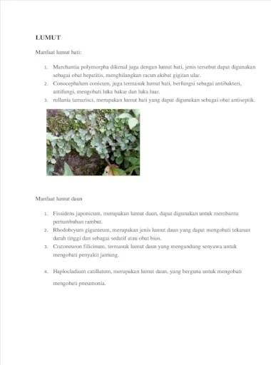 Manfaat Tumbuhan Lumut : manfaat, tumbuhan, lumut, Manfaat, Lumut