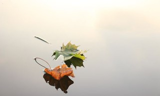 maple-leaves-690233_1280