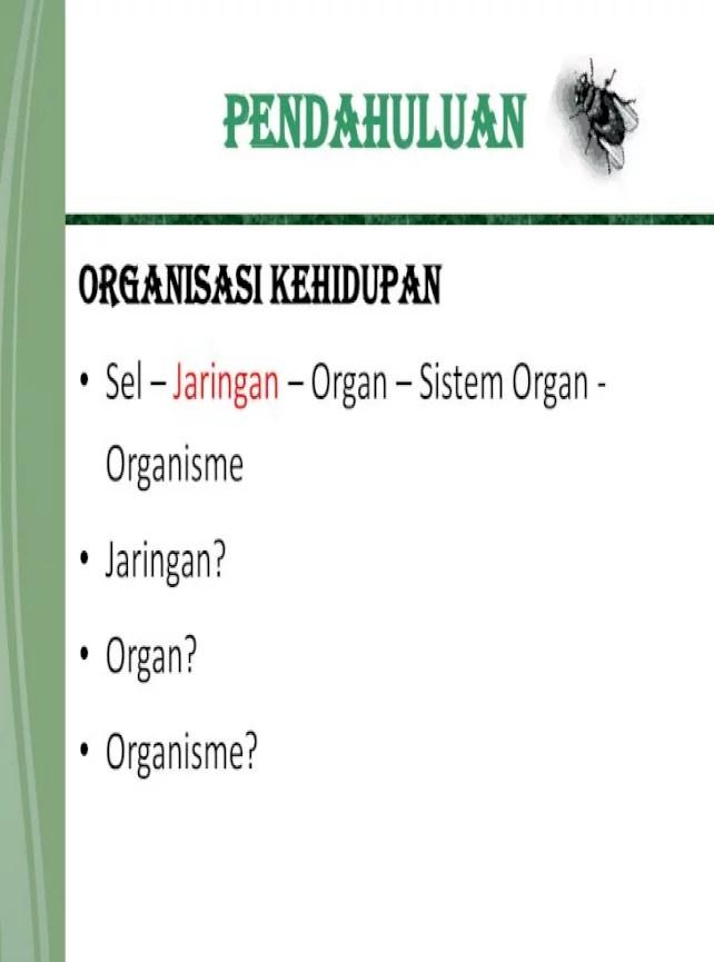 Sel Jaringan Organ Sistem Organ Organisme : jaringan, organ, sistem, organisme, Struktur, Fungsi, Tumbuhan, Document]