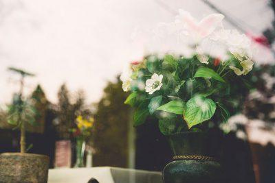 Easy care houseplants