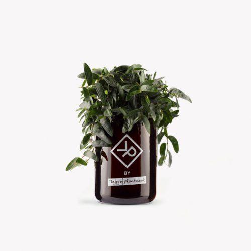 Vitamin Plant