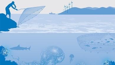 Photo of تقييم إدارة التأهيل وإعادة الإعمار لقطاع الصيد البحري والثروة السمكية بعد العدوان على غزة 2014