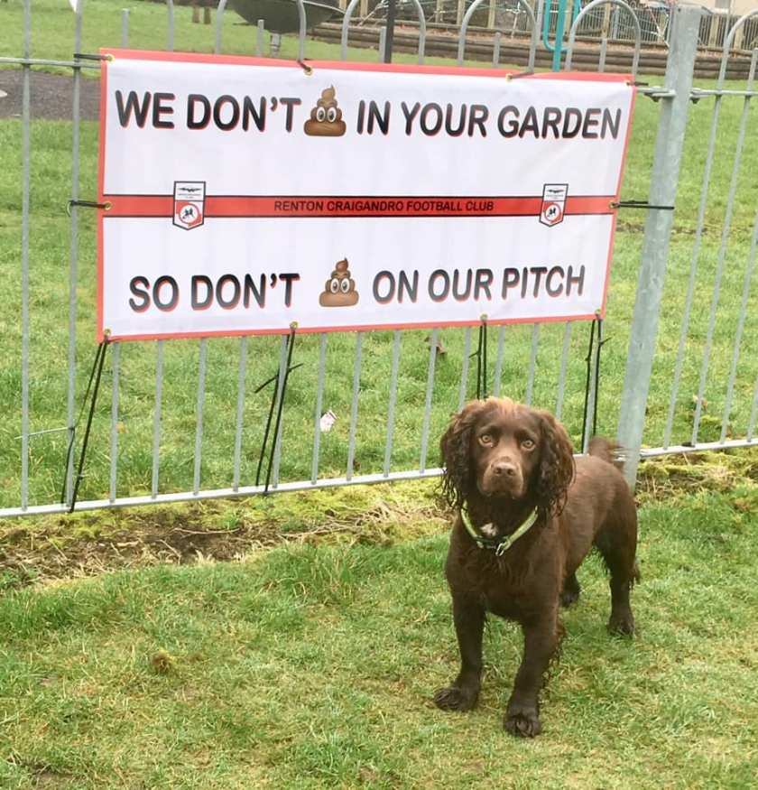 Poo on the pitch