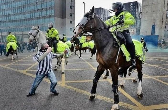Police horse on duty.jpg 2