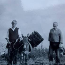 Connemara - donkey and turf at Inish Turbot