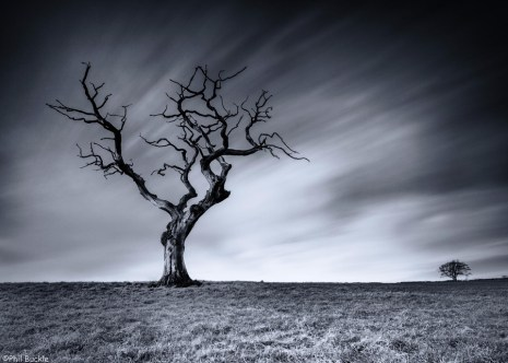 Lone Tree by Phil Buckle