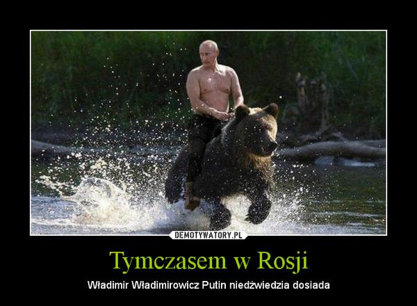 Znalezione obrazy dla zapytania Putin na niedżwiedziu
