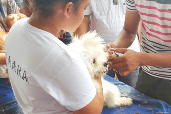 sm-pet-park-taytay-launch-pet_grooming