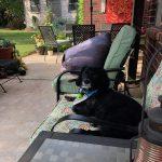 Tuffy, my pup