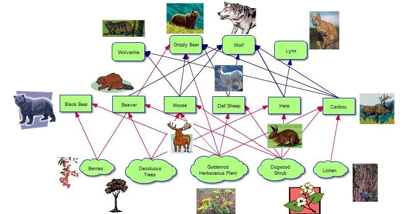 Chicken Food Chain Food Web Project