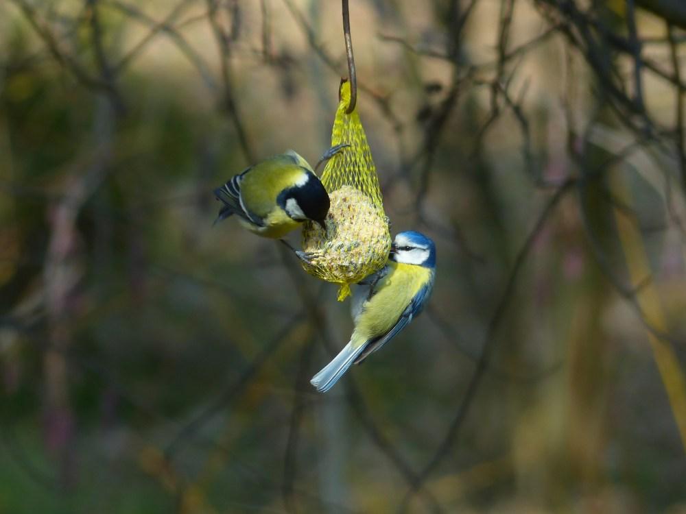 vogelvriendelijke tuin