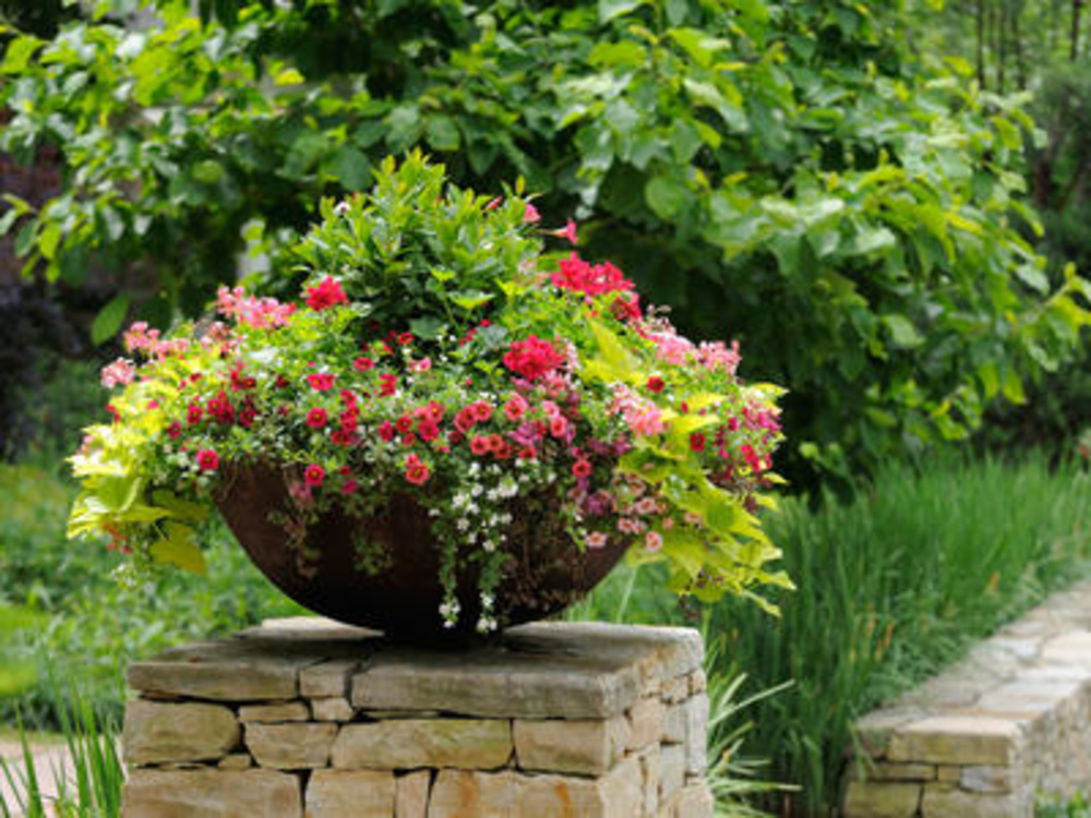 Container Gardening Tips & Ideas Flower & Plant Container