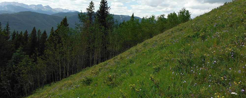 5 Steps For Erosion Control On Steep Slopes And
