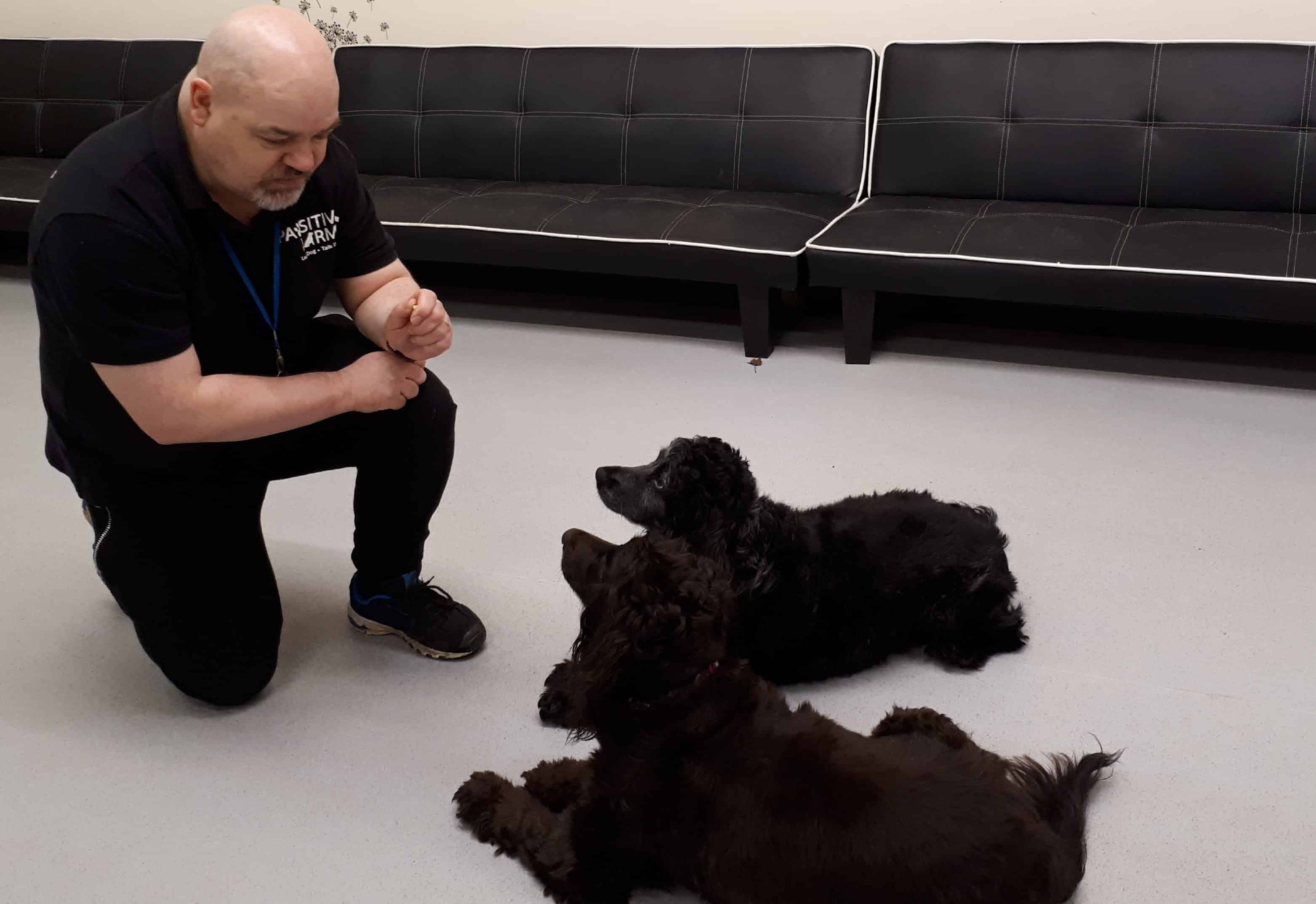 Using the PERFECT method of dog training: Setting the development foundation